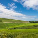 The vista of Dorset