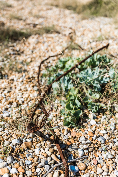 Pebbles, metal wire and some plants. Life finds its out of anything!