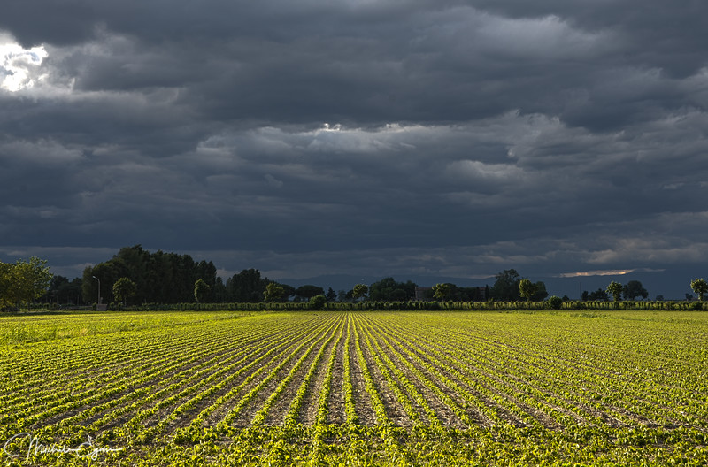 Thunderstorm brewing over a freshly planted field. During a whole day, storms kept building over a couple of hours, filtering the light in amazing ways.  They broke, it poured rain for 15mns and the sun came up again.  And it all started over again.