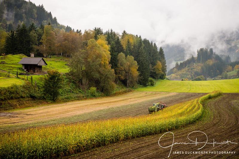 Fall Harvest near Marau, Austria