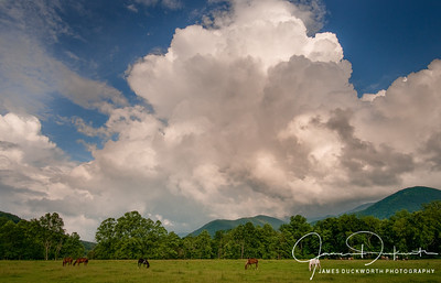 Cades Cove Pasture, Great Smoky Mountains National Park