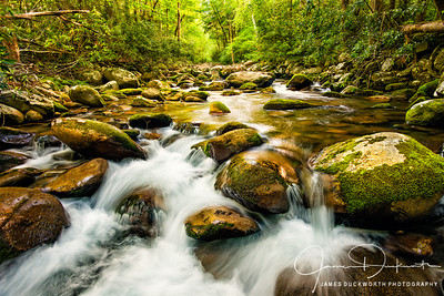 Little Pigeon River, Great Smoky Mountains National Park