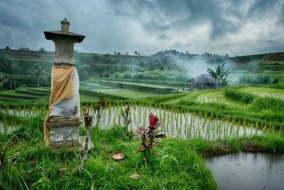 Jatiluwih Rice Terraces, Bali, Indonesia - 2016