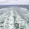 Wake of Maasdam Cruise Ship at Halifax, Nova Scotia, Canada.
