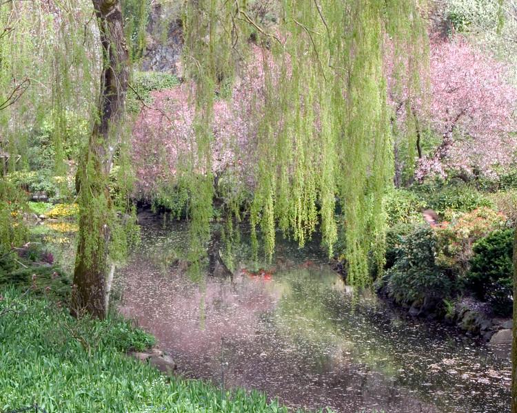 Sunken Garden in Butchart Gardens, Victoria, British Columbia, with reflections of flowering trees in pond underneath Willow tree.