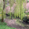 Sunken Garden in Butchart Gardens, Victoria, British Columbia, with reflections of flowering trees in pond underneath Willow tree.