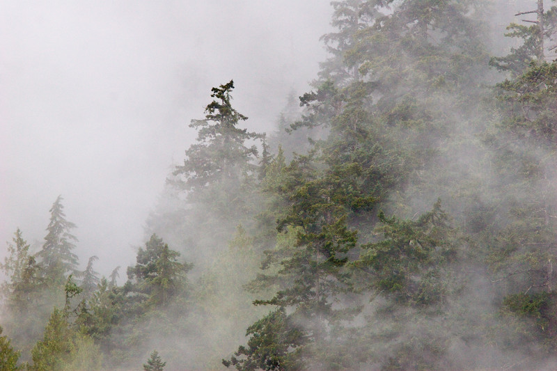 Trees in foggy mountains along the salt water inlet that leads to Port Alberni, British Columbia.