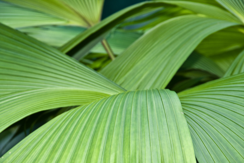 Patterns and Palm Leaves