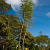 Garden scene at the Bougainvillea Hotel in San Jose, Costa Rica.