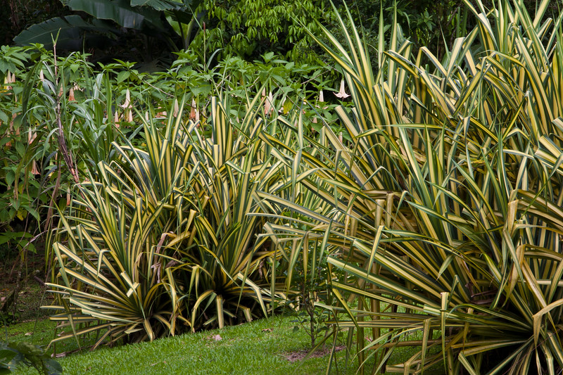 Tropical garden Scene in the rainforest at Arenal Observatory Lodge near Fortuna, Costa Rica.
