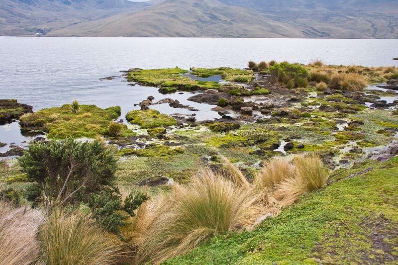 Lake in the Antisana Reserve in Ecuador.