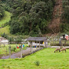 Llamas on rural homestead in Ecuador