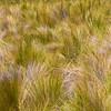 Grasses in the Antisana Reserve in Ecuador.