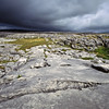 The Burrens, a rocky and barren area along the Irish coast. Many wildflowers grow here, in spite of the difficult terrain, after their seeds  are blown across the ocean from other places.