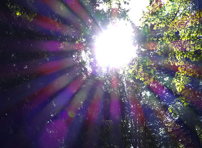 Sunburst, Stanley Park