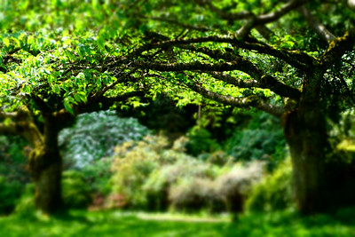 Trees in Stanley Park, Vancouver