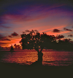 Divi Divi Tree at Sunset