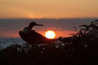 Bird nesting at sunset