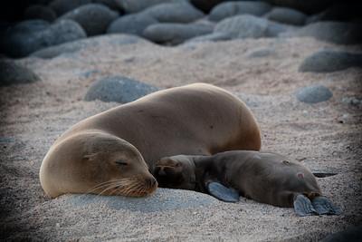 Baby sea lion sleeping