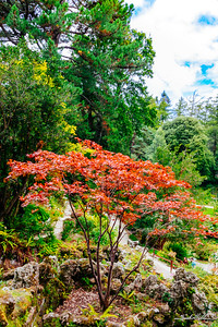 Early Fall leaves, Japanese garden, Powerscourt Estate