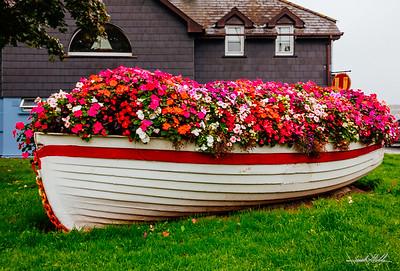 Flowers in Kinsale by Marina
