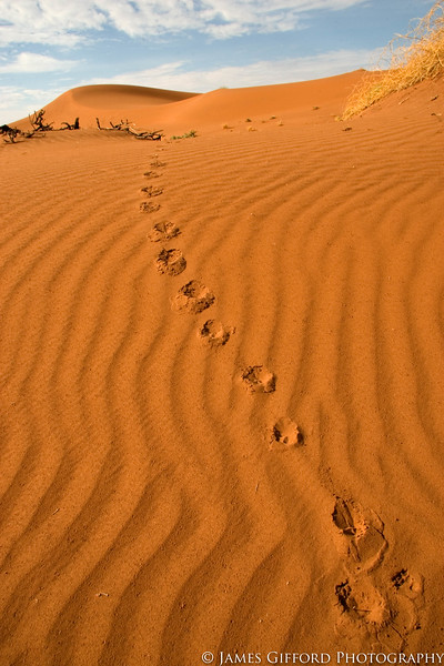Footsteps to Nowhere