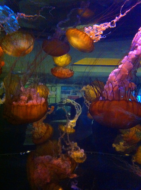 Jellies at Mandalay Bay<br><i>photo:  Steve Barber</i>