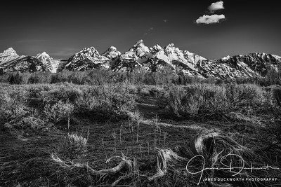 A Cold Morning in the Teton Flats