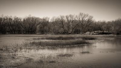 Quiet Landscape