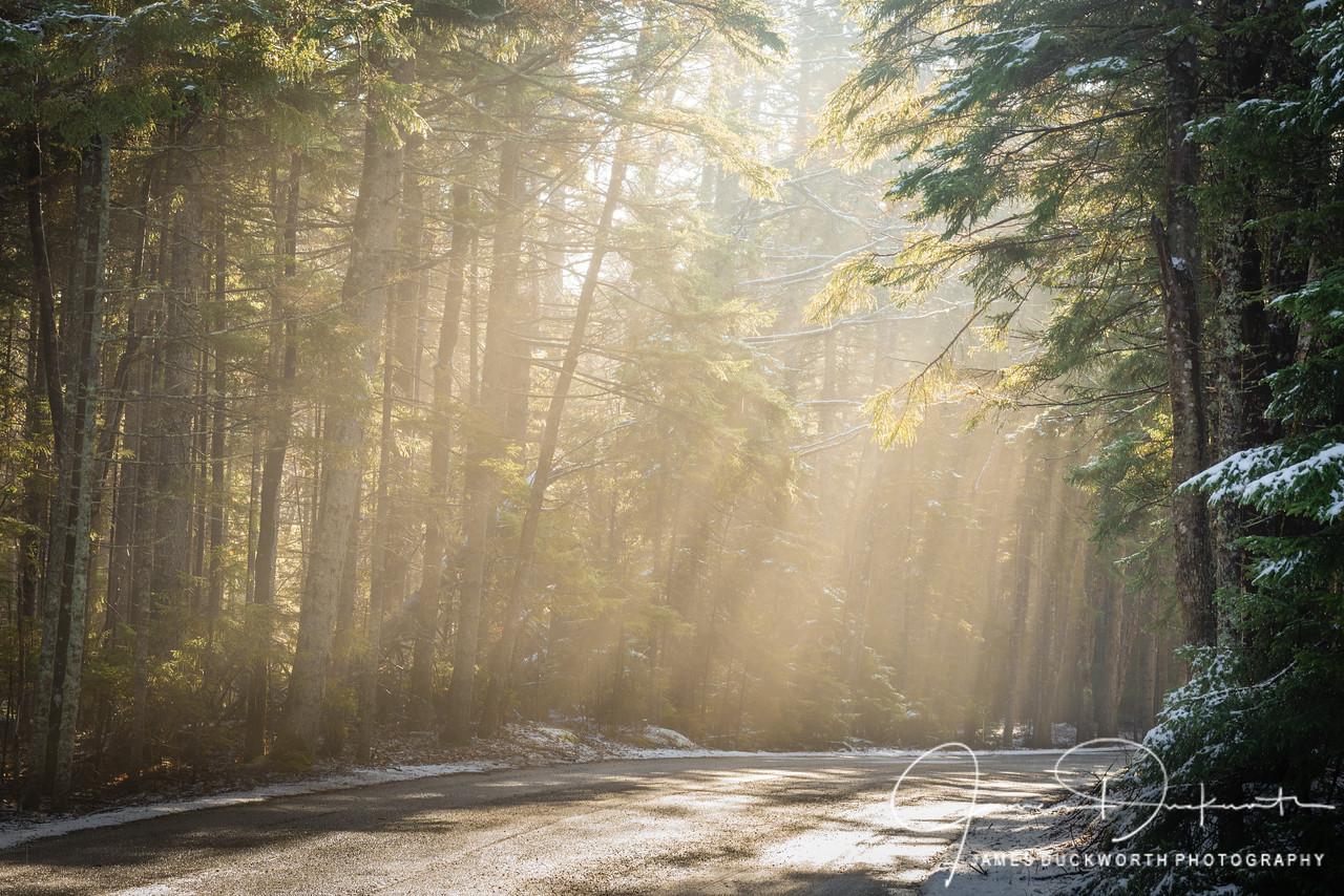 Morning Light, Acadia National Park, Maine