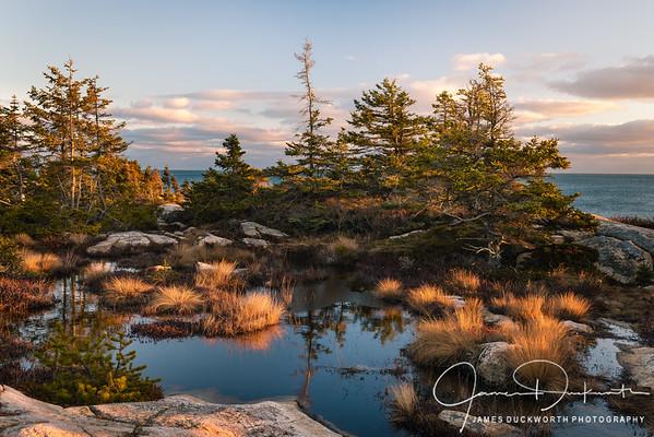 Tidal Pool Schoodic Point, Acadia National Park