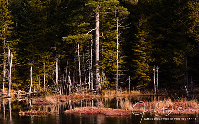 Pond in Acadia National Park, Maine