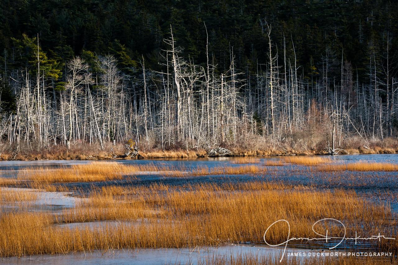 Upper Hadlock Pond, Acadia National Park, Maine