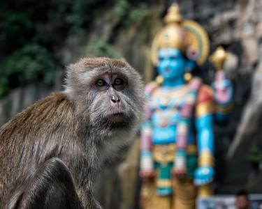 Monkey at the Ramayana Cave, Batu Caves, Selangor, Malaysia - 2015