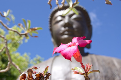 """Walk as if you are kissing the Earth with your feet.""  ― Thich Nhat Hanh  This statue of Buddha on Maui is the largest outside of Japan."
