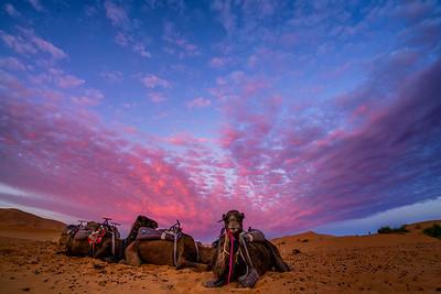 Camel Sunrise