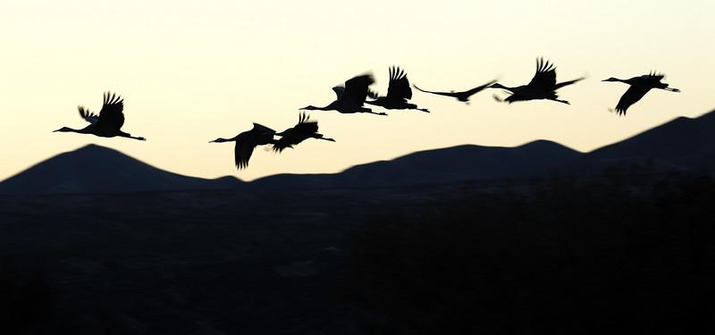 Black and White graphic photo from Bosque del Apache