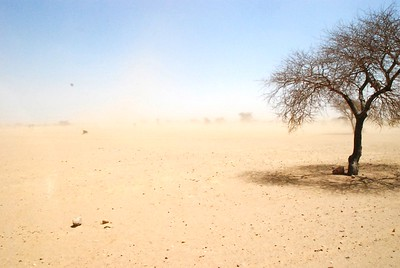 Harmattan desert wind blowing across the landscape
