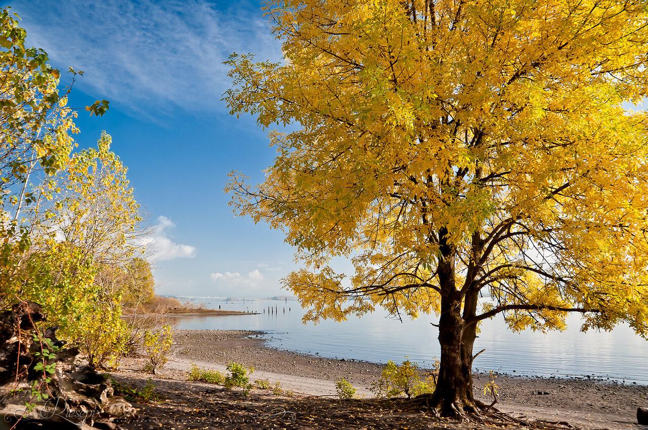 Columbia River Autumn