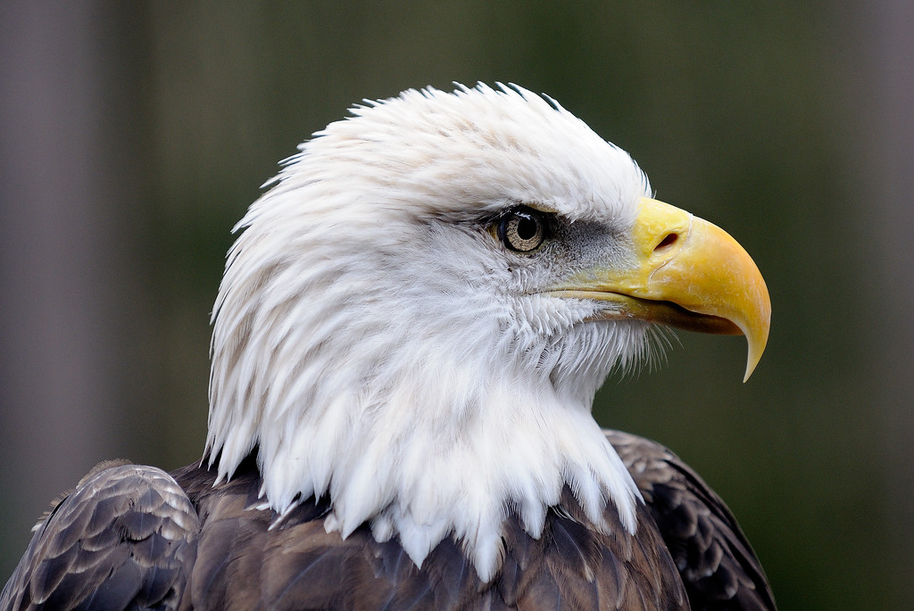 National Aviary - Pittsburgh, PA