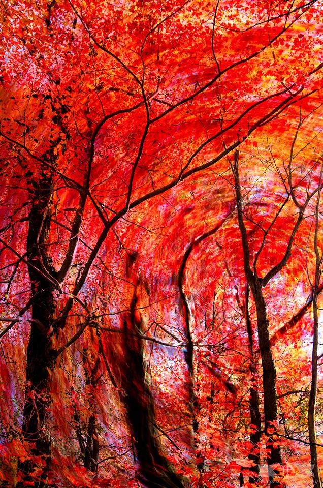 Deeper into Autumn