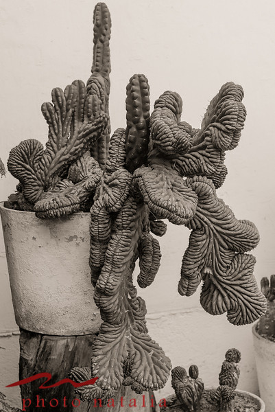 At the museum erotica there was this garden with these very old cacti.