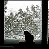 One Cold View - Cat and Snow.  This is why we headed South!  (Photo by IM)