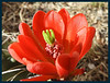 Cactus flower.  Our flowers at home always start blooming just before we hit the road in the spring.