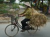 On the road, between Ha Long Bay and Hanoi<br /> TK3_2142