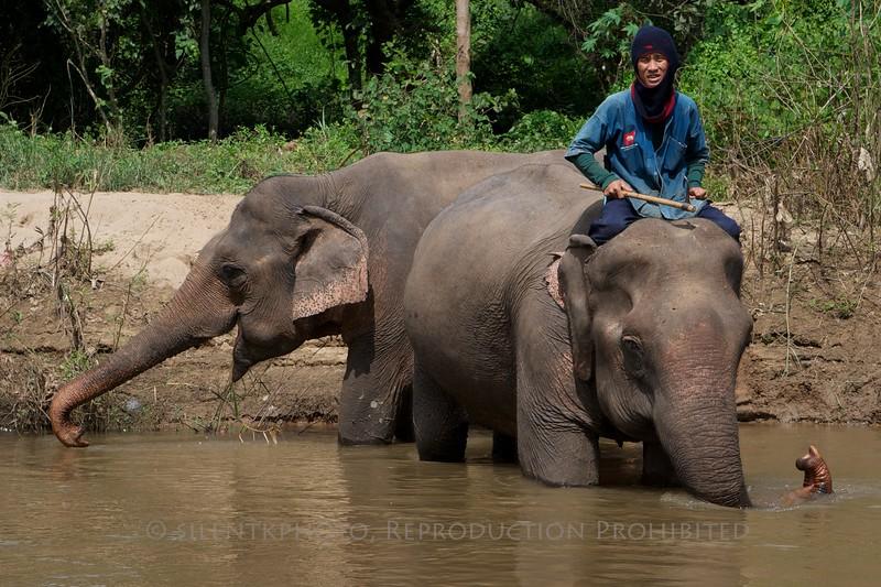 Chiang-Dao Chiang Mai Elephant Training Center, Thailand<br /> TK3_0429