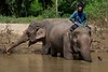 Chiang-Dao Chiang Mai Elephant Training Center, Thailand<br /> TK3_0429
