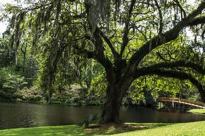 Charleston-06114
