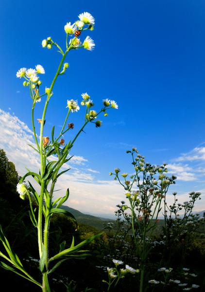 Ladybug - Foothills Parkway - Great Smoky Mountains National Park