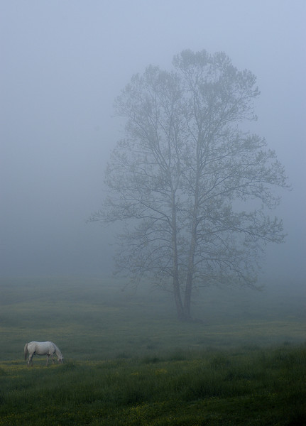 Horse and Tree - Cades Cove - Great Smoky Mountains National Park